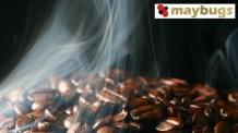 보상형 블로그 플랫폼 메이벅스(maybugs) 신규회원 1000명에게 스타벅스 커피