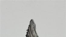 [지상갤러리] 두산갤러리 임영주 개인전 '물렁뼈와 미끈액'