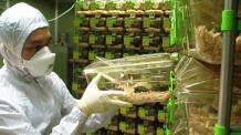 [과학](하단) 고령실험동물 확보…퇴행성질환 등 노화연구 본격화된다-copy(o)1