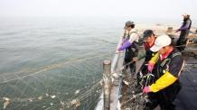 (5면) [2018 남북정상회담-평양]NLL 공동어로 현실화...어종자원 조사.조업통제 협의 바빠진 해수부