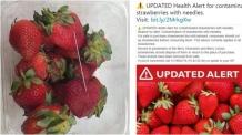 호주 이어 뉴질랜드서도 '바늘 딸기' 공포