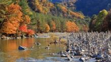 서리 내린다는 '상강' 곳곳 비…보신위한 특별식 뭐가 있을까