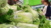 장바구니서 녹색채소가 사라졌다?