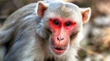생후 12일 된 아기 납치해 살해한 원숭이