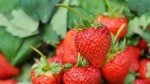 딸기 한 상자 6만원대…작년보다 가격 47% 급등