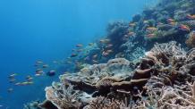 몰디브 '최고 다이빙' 수상…무푸쉬 등 90개 관광섬