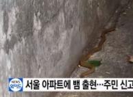 서울 방배동 아파트에 1m 뱀 출몰…혼비백산
