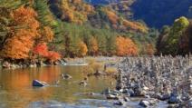 서리 내린다는 '상강' 곳곳 비…선조들이 즐긴 특식은
