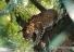 승려 명상 중 표범에 물려 사망