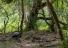 갈라파고스 거북, 113년 만에 발견