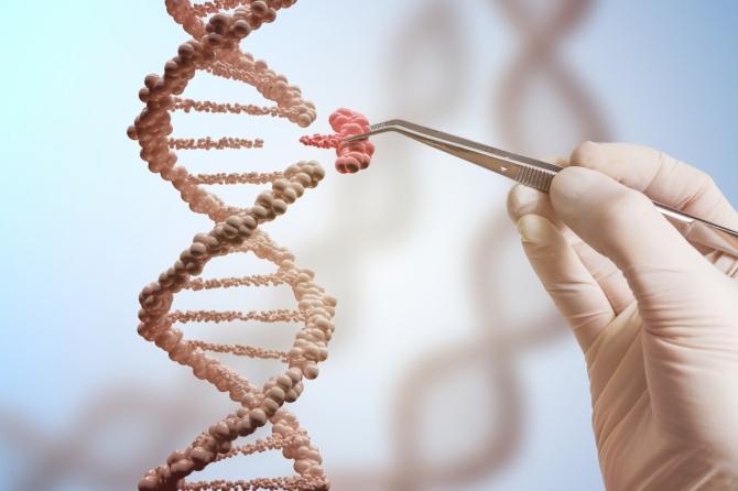 유전자가위 이용한 유전자 치료 길 열린다 이미지1