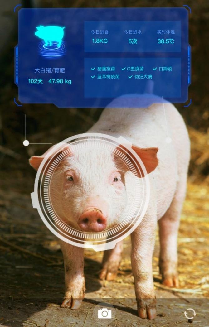 돼지 얼굴 인식 기술이 필요한 이유는 이미지2