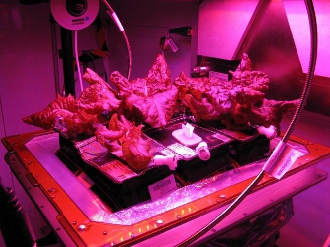 우주서 배양육 첫 생산…우주 식량 경쟁 이미지2