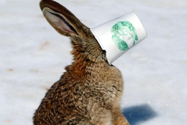 Rabbit gets stuck in cup