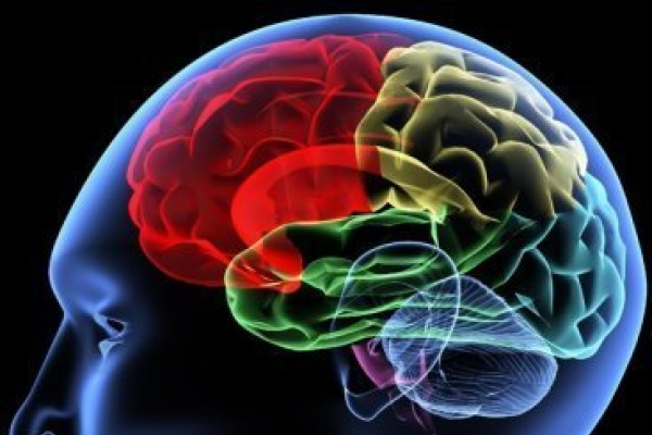 Study: Learning a language changes brain