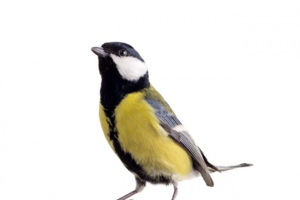 Good looking birds raise healthy babies
