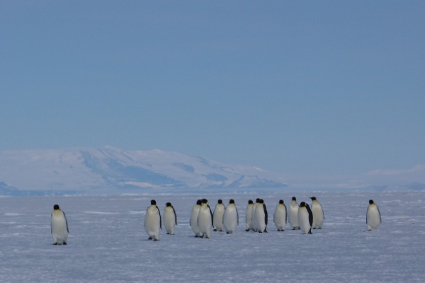Antarctic summer ice melt accelerating: study