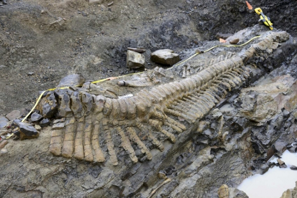 Huge dinosaur tail discovered