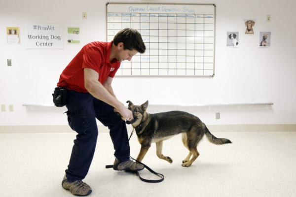 Dogs help sniff out cancer
