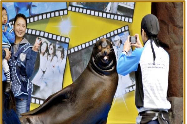 Seoul Zoo retires sea lion presentation