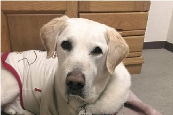 Guide dog endures pain of stabbing in silence
