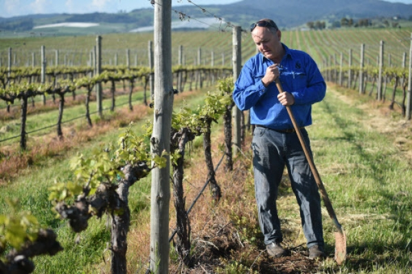 Climate change battle heats up for Australian winemakers