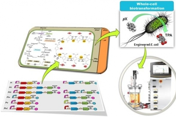 Scientists develop new method to produce TPA