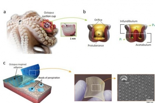 Scientists develop adhesive patch inspired by octopuses