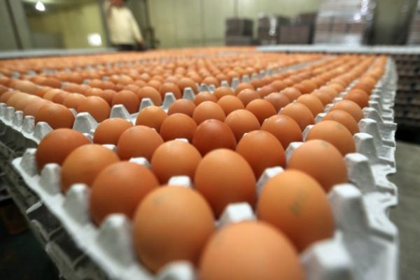 [팟캐스트](209) 살충제 계란, 文 '전쟁 막을 것' 발언
