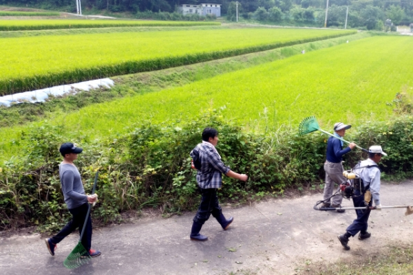 [Photo News] 'Beolcho': Weeding of ancestral tombs