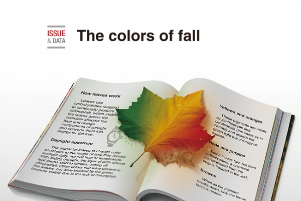[Graphic News] The colors of fall