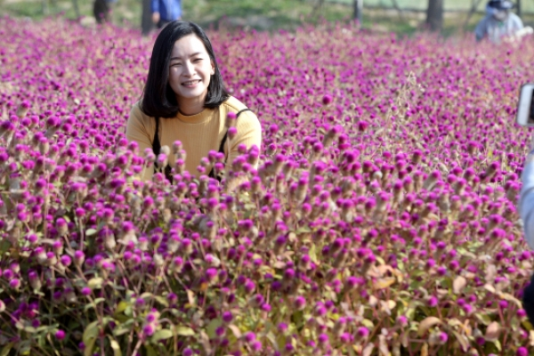[Photo News] Globe amaranth denotes unfading love