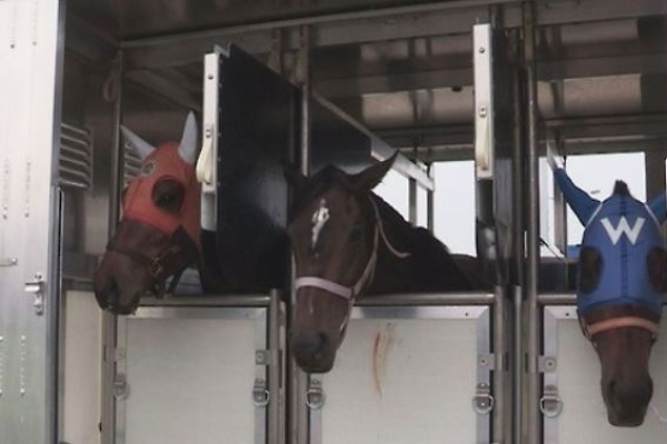 Korean horse racing body imported more than 4,000 horses in last 10 yrs: lawmaker