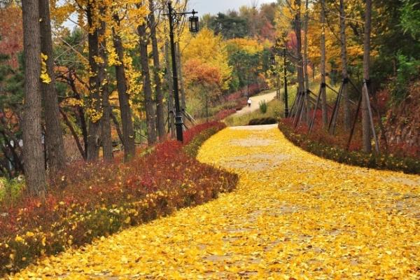 [Neighborhood Trails] Nature walk atop Namsan in heart of Seoul