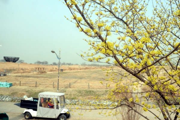 [Photo News] Spring blossoms covered in fine dust