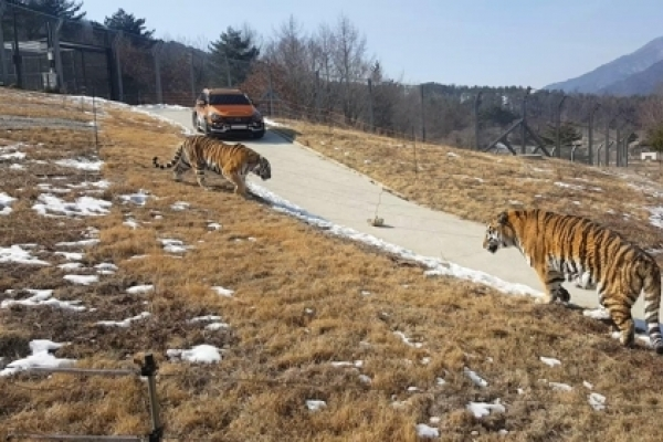 Korea to open Asia's largest arboretum with released Siberian tigers next week