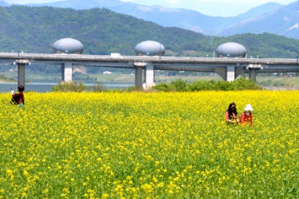 [Photo News] A carpet of canola blossoms