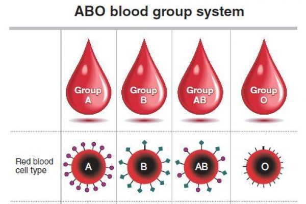 [Weekender] What blood types are really about