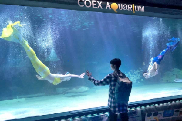 Coex Aquarium introduces summer performances and 'healing time'