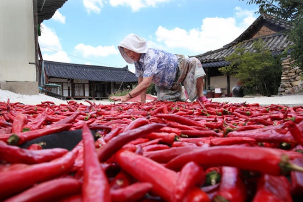 [Photo News] What's redder than the sun?