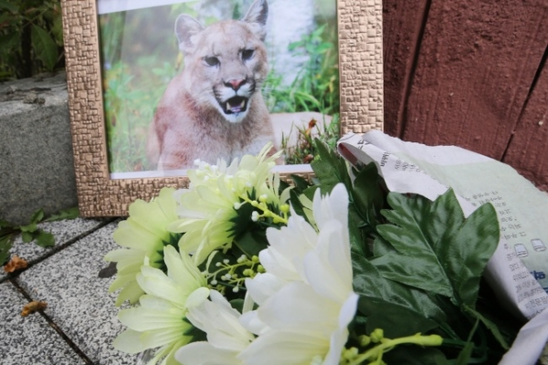 Death of puma triggers public protest against zoos in South Korea