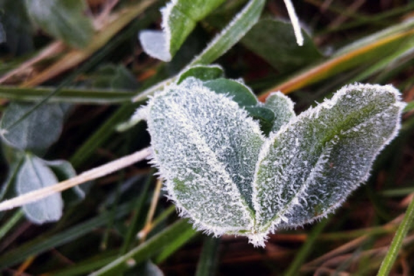 [Weather] Chilly, sunny weather continues on weekend