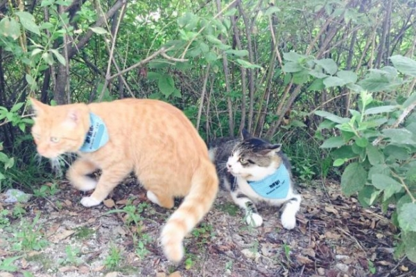 [Weekender] College students extend helping hands for feral cats