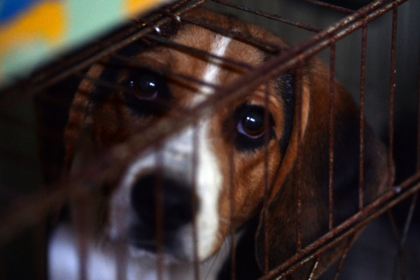 [Weekender] Homeless animals in Korea: Finding homes for those who fall through the cracks
