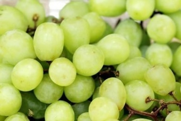 Grape variety with mango taste grows popular in Korea