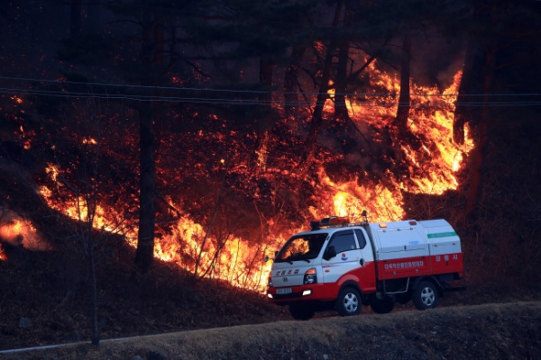 Fire in Yangyang burns 20 ha of forest