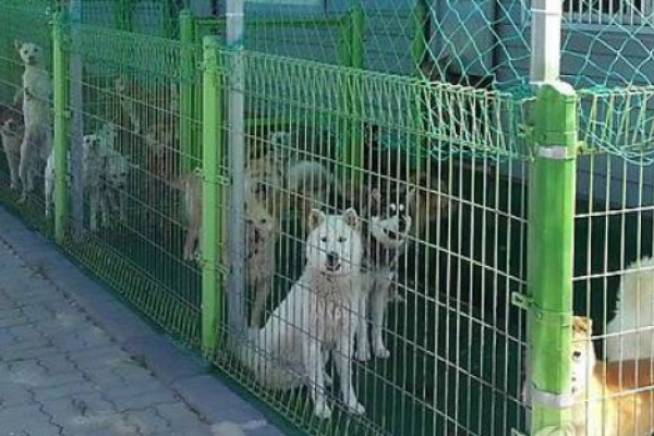 Agriculture Ministry to strengthen penalties for animal abuse
