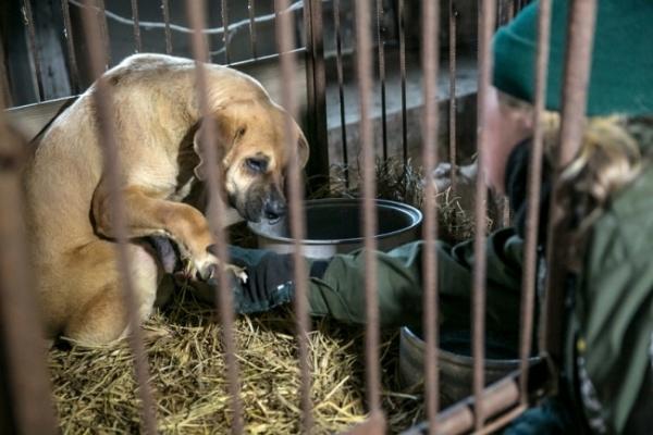 [Video] Inside dog farm in Korea