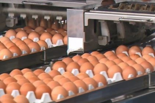 Egg-laying date to be inscribed on eggshells