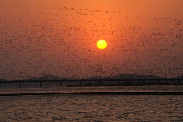 [Eye Plus] Migratory birds say adieu to S. Korea as spring arrives